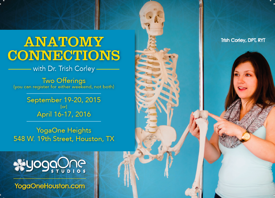 Yoga Anatomy Workshops