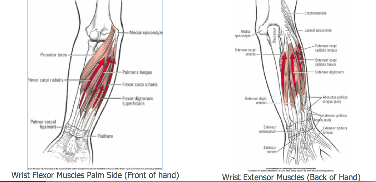 Wrist Pain In Yoga