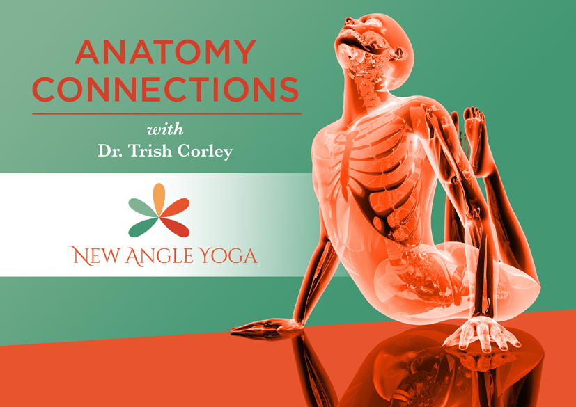AnatomyConnection_Postcard_ƒ