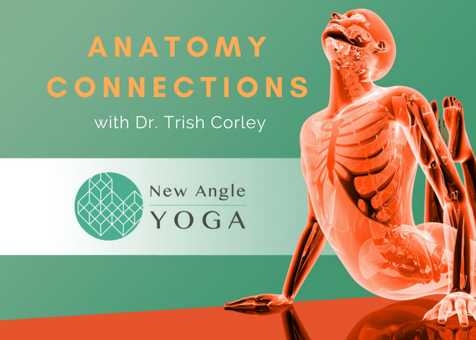 Anatomy Connections New Angle Yoga
